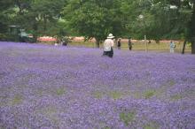 Furano Flowers 1