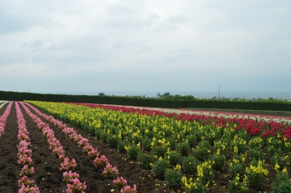 Furano Flowers 2