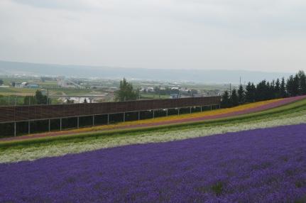 Furano Flowers 3